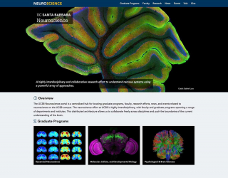 UCSB Launches New Neuroscience Website Portal